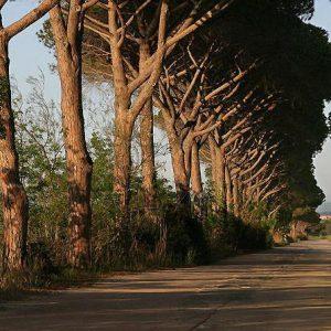 tuscany-trees